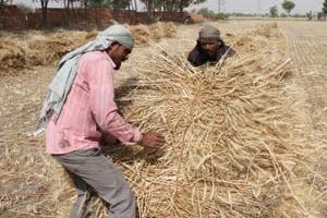 wheat straw burning