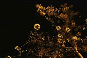 Delhiwale: Amaltas at midnight