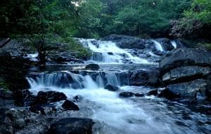 Deep within the Western Ghats, snapshots from a world without us