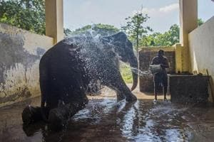 In pics: 'Father to Mumbai's elephants' will retire from his jumbo...