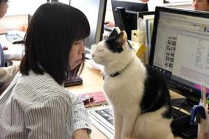 Animal therapy: Cats, dogs, goats counter stress at Tokyo firms