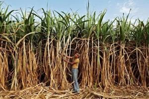 CCEA may clear Rs 25/qtl hike in cane purchase price for 2017-18