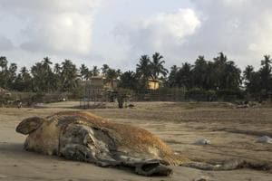 45-ft whale largest mammal to wash ashore in Mumbai