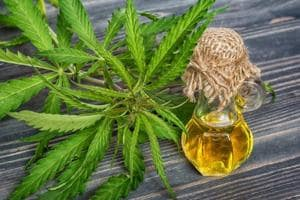 Cannabis extract reduces seizures in severe cases of epilepsy, finds...