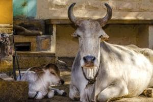 Centre bans cow slaughter across India; cows can be sold only to...