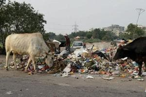 VHP demands nationwide ban on cow slaughter