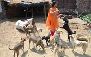 For Shalini Agarwal, HT woman awardee, animal care is a pet cause