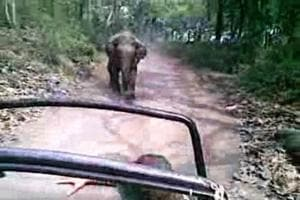 Close shave for tourists: Tusker charges at vehicle in Corbett...