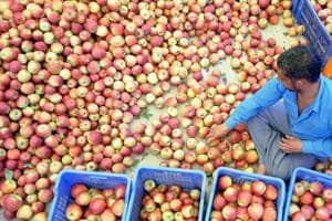 Hail storm damages apple crop in Himachal Pradesh, locals fear it is...
