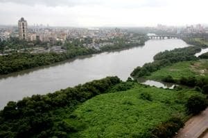 Mangroves outside Mumbai Metropolitan Region are not protected by...