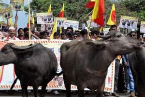 Cattle trade rules: Buffaloes likely to be removed from 'no slaughter'...