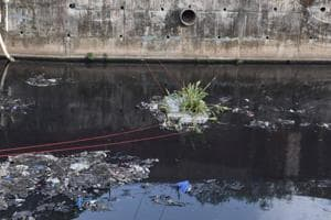 Floating island of plants to clean Mumbai's river which is 100 times...