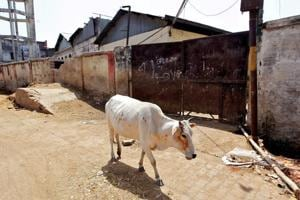 Govt to examine public representation on cow slaughter ban: Venkaiah...