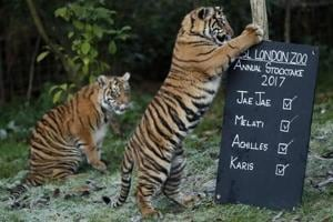 Tiger kills female zookeeper at zoo in England, visitors evacuated