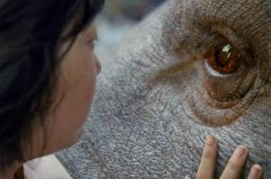 Cannes Competition Netflix title, Okja, runs into roadblock in South...