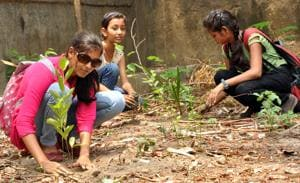 5.43 crore saplings planted across Maharashtra in July, not even 1% in...