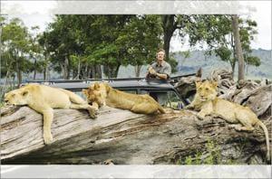 Jonathan Scott with the Marsh Pride lions in Masaai Mara.