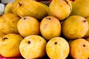 Don't discard your mango peels, they make jams, jellies healthier,...
