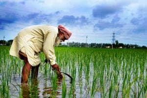 What about farming in Punjab budget: Spike in outlay, 'token' for debt...