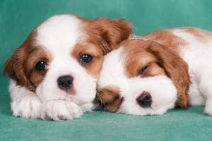 Photos of puppies and bunnies can rekindle marital spark