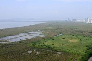 Ensure mangroves near Mumbai are not cut without court nod: Bombay HC...