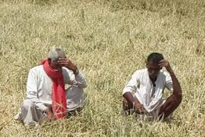 Farmer commits suicide in Rajasthan, son says debt killed him