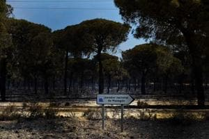 More than 1,500 evacuated due to forest fires in southern Spain