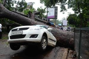 Tree fall holds traffic for three hours in Mumbai suburb
