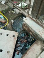 Noida: Health dept pulls up four building owners over mosquito...