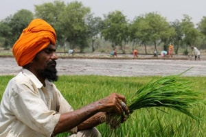The Punjab Khet Mazdoor Union has expressed disappointment and sought waiver of loans of agricultural labourers.
