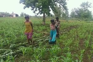 Sisters Radha and Kunti pull the yoke in their land at a tribal village in Sehore district of Madhya Pradesh. (HTPhoto)