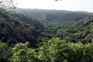 The forest department also plans to start resorts in sanctuaries and for this locals will be given a chance.
