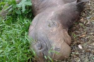 Two-horned African rhinoceros 'Mohan' died at Assam State Zoo in Guwahati.