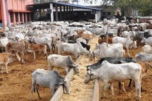 The milk available in the market is of exotic and crossbred cows such as Jersey and Holstein and not of indigenous breeds such as Rathi, Tharparkar, and Gir, the minister said.