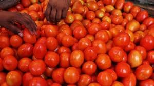 Mumbai police's new task: Catch up with men who stole tomatoes worth...