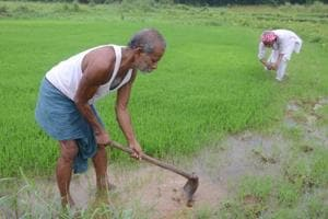 CAG criticises govts for poor implementation of crop insurance schemes