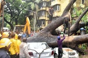 Four trees collapse, damage road in Mumbai's Bandra after heavy rains