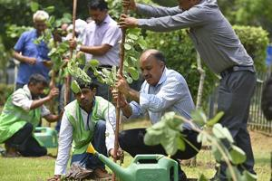 Week 2 of NDMC green drive: Four lakh saplings planted