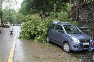 After 57 trees fall in 2 days, Mumbai civic body's pruning exercise...