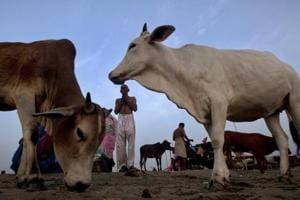 Supreme Court to hear cow slaughter ban case today