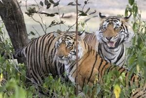 Photos: International Tiger Day a roar for urgent action