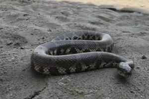 A snake's poison becomes dangerous when it mixes in blood and gets circulated, said a doctor.