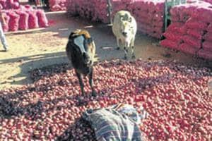 Onions at Neemuch Mandi in Madhya Pradesh.