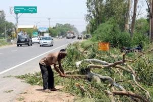 Tree-felling underway on NH-64 in October 2015.