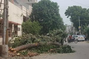 Trees being chopped in Punjab. Meghalaya now has a helpline for felling trees that poses risk to people. (HT file photo / Representational)