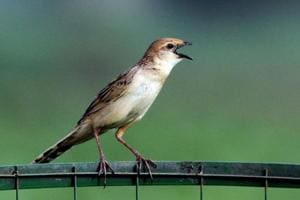 Threatened bird species sighted in Rajasthan