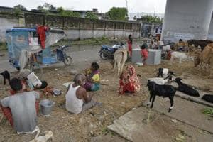 At relief camps in Bihar's East Champaran, flood victims share space...