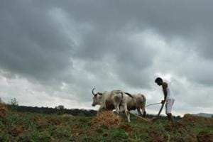 Maharashtra to waive loans from October-end; 14 lakh farmers submit...