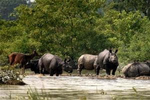 Assam floods: Over 140 animals, including 7 rhinos, found dead in...