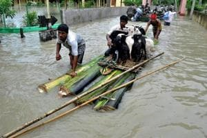 Villagers ferrying their cattle to safety on a raft made with banana plant stems from a flood-hit village in Nagaon district of Assam on Sunday.